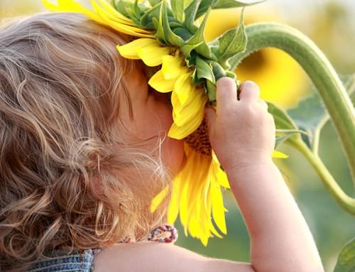 Cómo hacer amar la jardinería a los niños